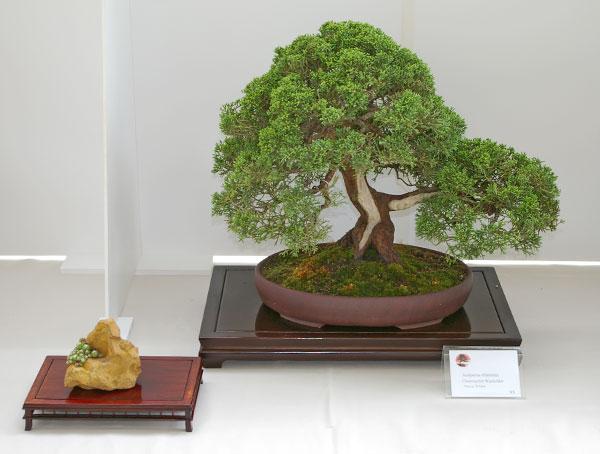 bonsai tage nrw bonsai ausstellung im mai 2007. Black Bedroom Furniture Sets. Home Design Ideas