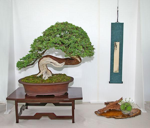 bonsai tage nrw bonsai ausstellung im mai 2010. Black Bedroom Furniture Sets. Home Design Ideas
