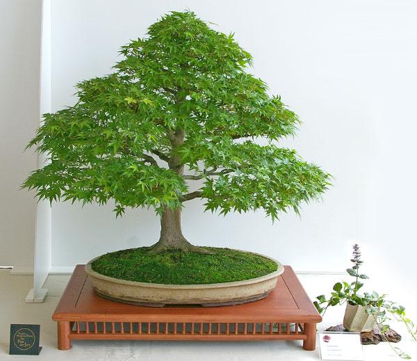 bonsai-tage nrw, bonsai-ausstellung im mai 2011, Hause und Garten