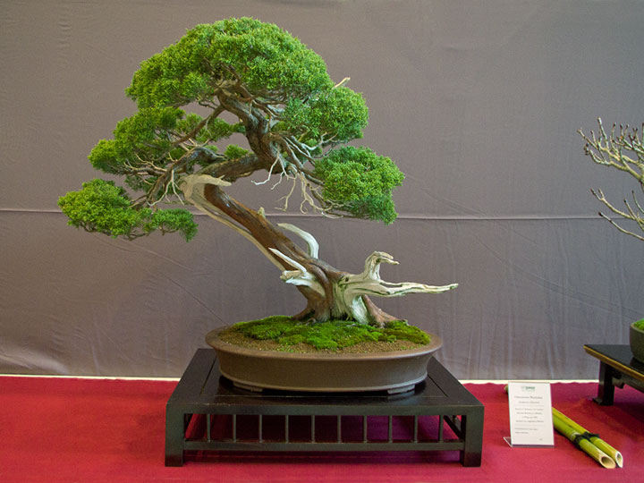 bcd ausstellung bonsai faszinationen und shohin passion hameln oktober 2017. Black Bedroom Furniture Sets. Home Design Ideas